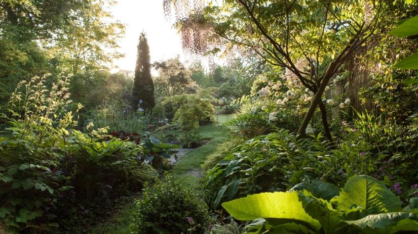 amelielosier-201505-jardin-matin-resized-4274.jpg
