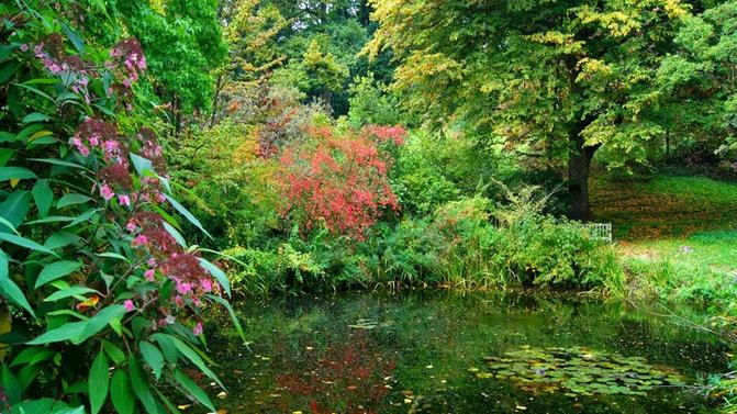jardin-du-bois-du-fay-etang-800x600_visuel_large.jpg