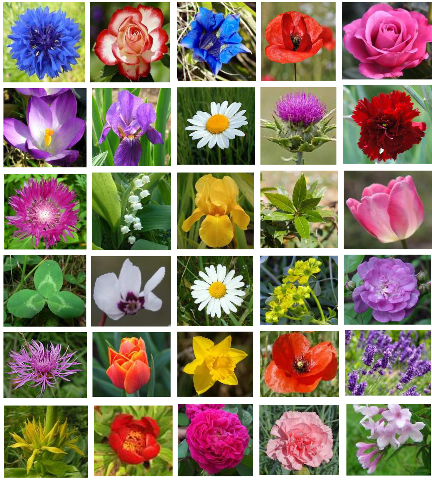 mosaique plantes Paradeisos