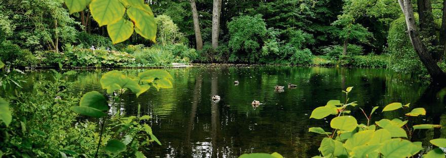 Esthétique du jardin paysager allemand XVIIIe-XIXe siècle ...
