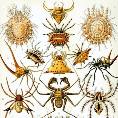 event_dans-la-toile-d-arachne-contes-d-amour-de-folie-et-de-mort_859825 (1)